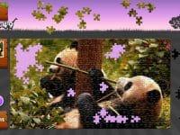 Animated Jigsaws: Wild Animals